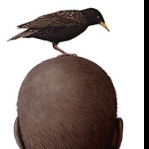 Animation of Bird shitting on a mans head
