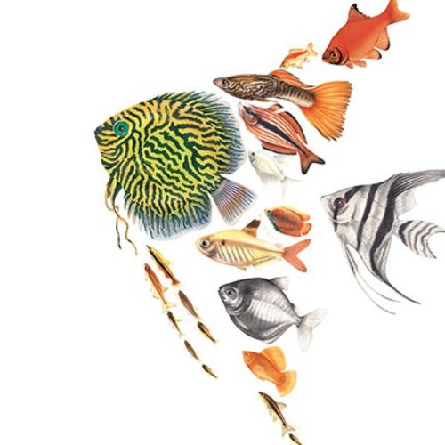 Animation of fish forming