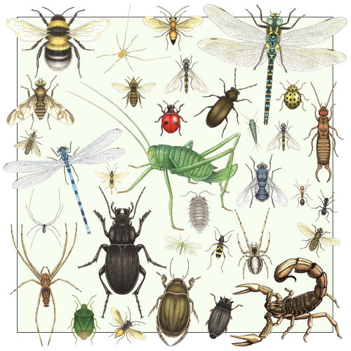 Illustration of insects and spiders