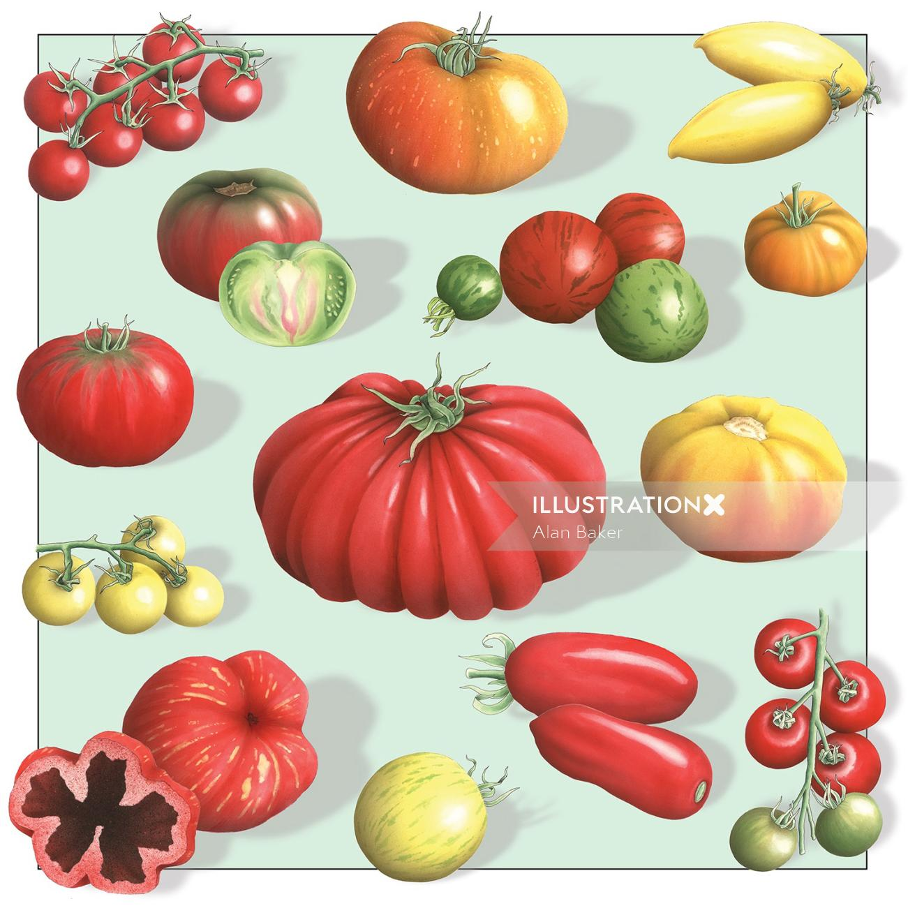 The Guardian tomatoes illustration by Alan Baker