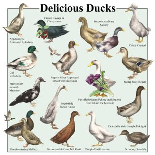 An Illustration Of Delicious Ducks Wall Chart