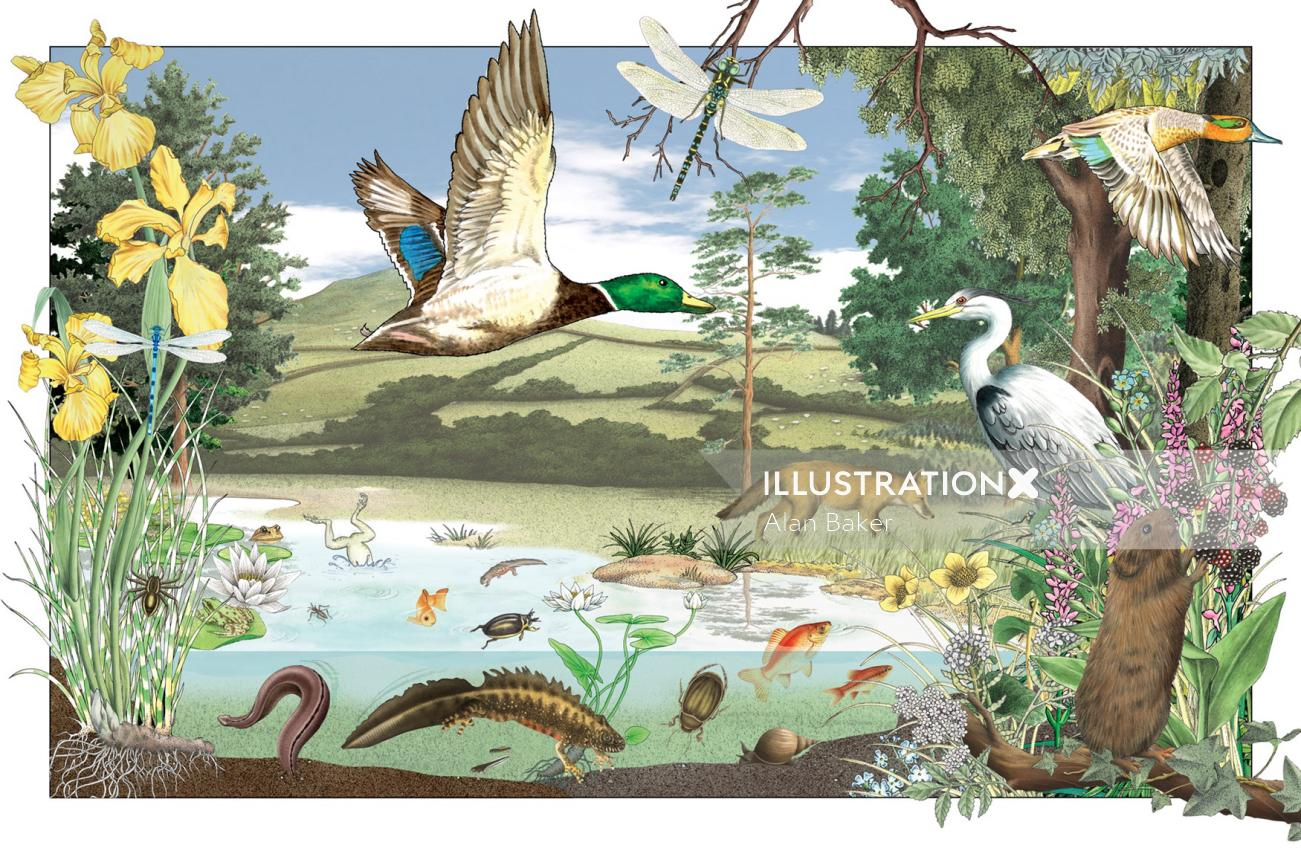 Wildlife in and around UK ponds for country life magazine