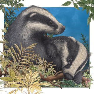 Baby badgers playing painting by Alan Baker