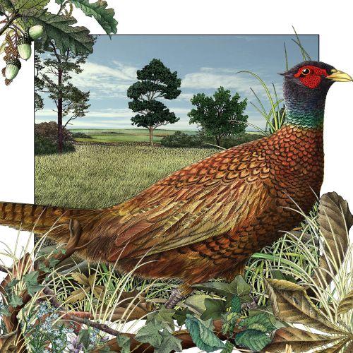Pheasant in Autumn for Templar books