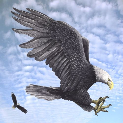 Eagle flying illustration by Alan Baker