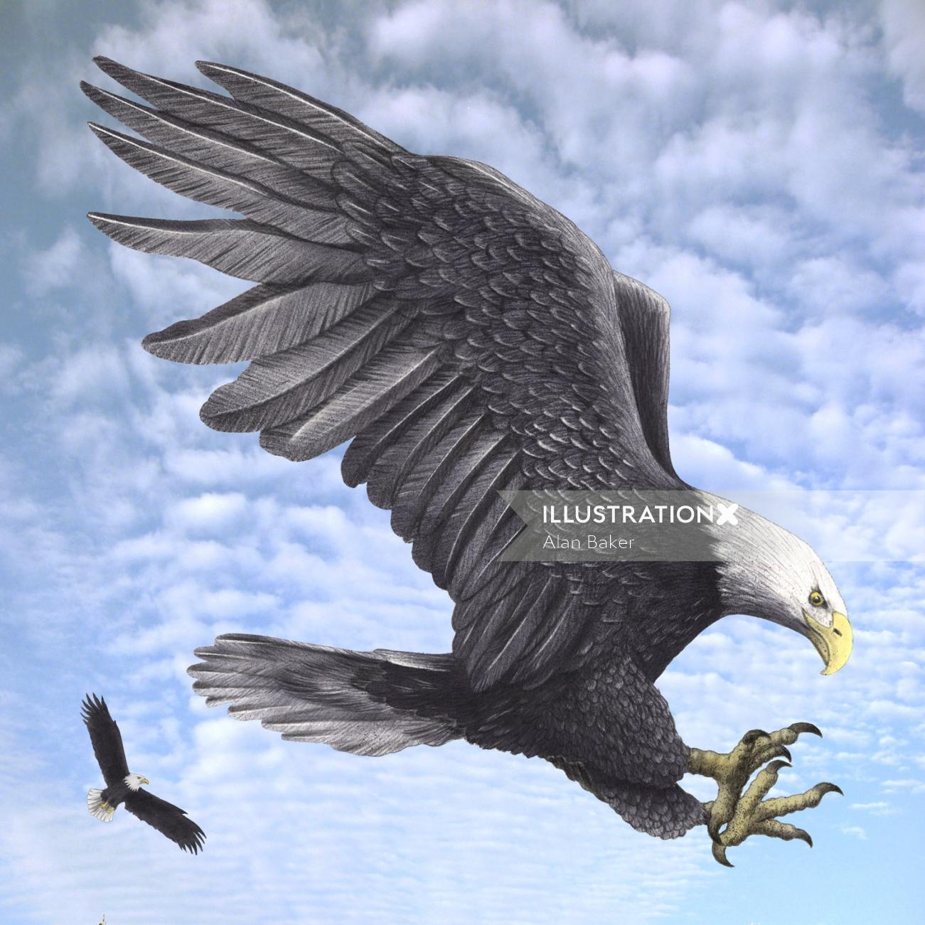 Eagle flying illustration by Alan Baker