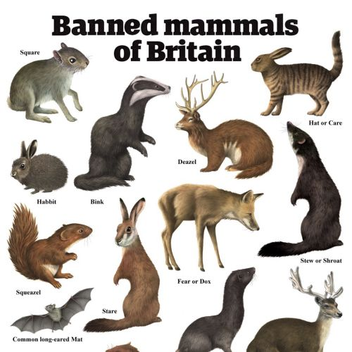 Mammals illustration by Alan Baker