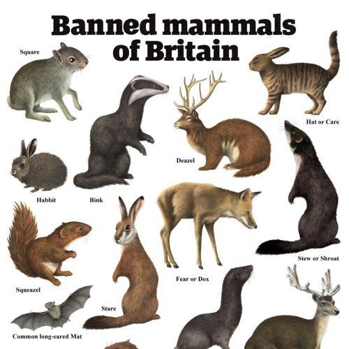 Mammals illustration by Alan Baker