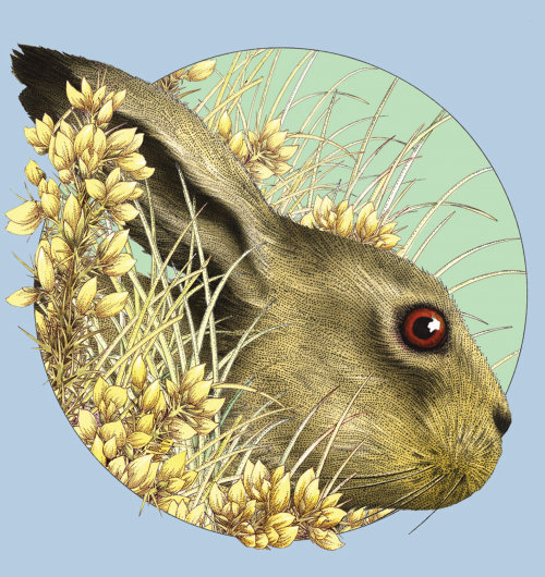 Hare behind gorse plants - illustration by Alan Baker