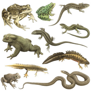 Reptiles illustration by Alan Baker
