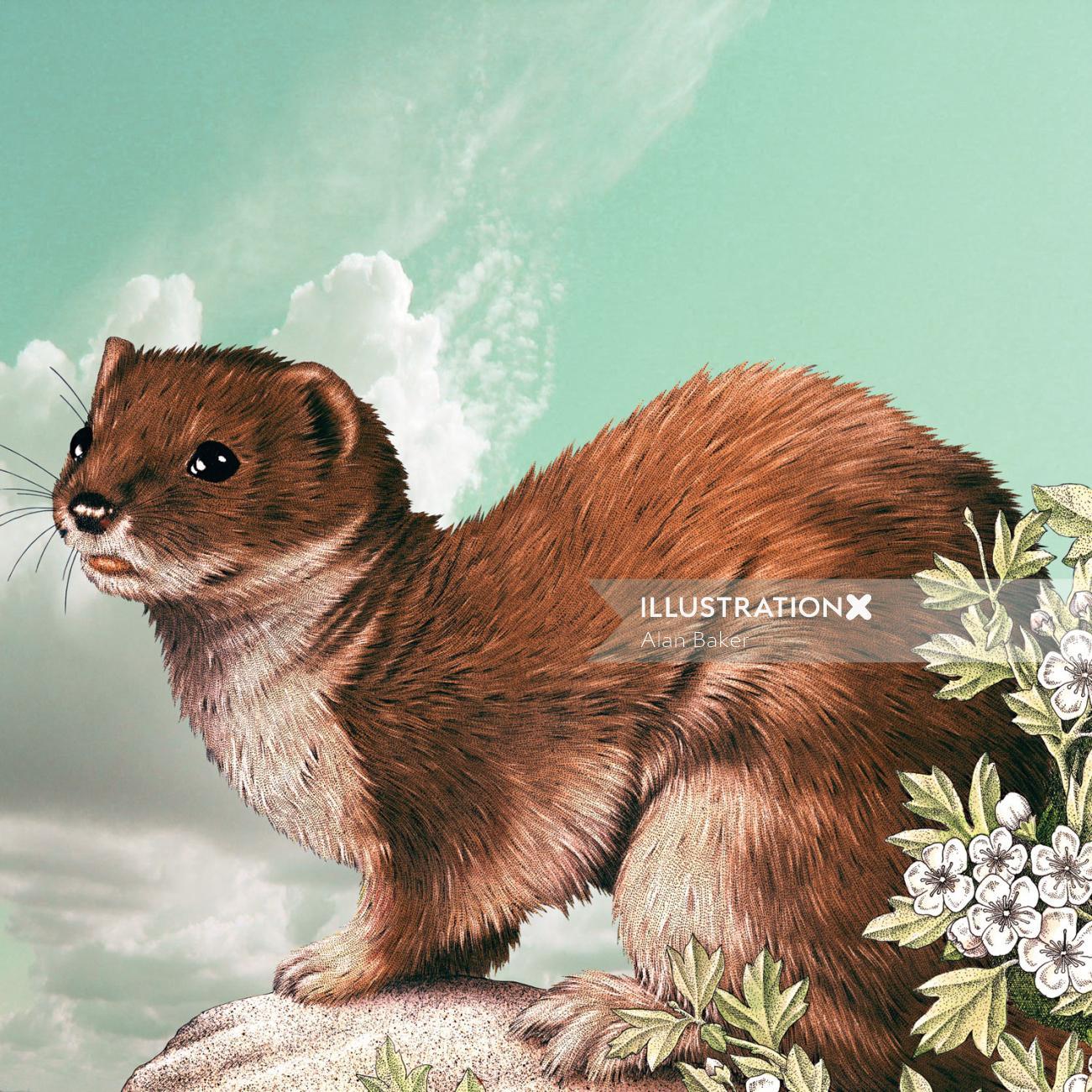Stoat animal illustration by Alan Baker