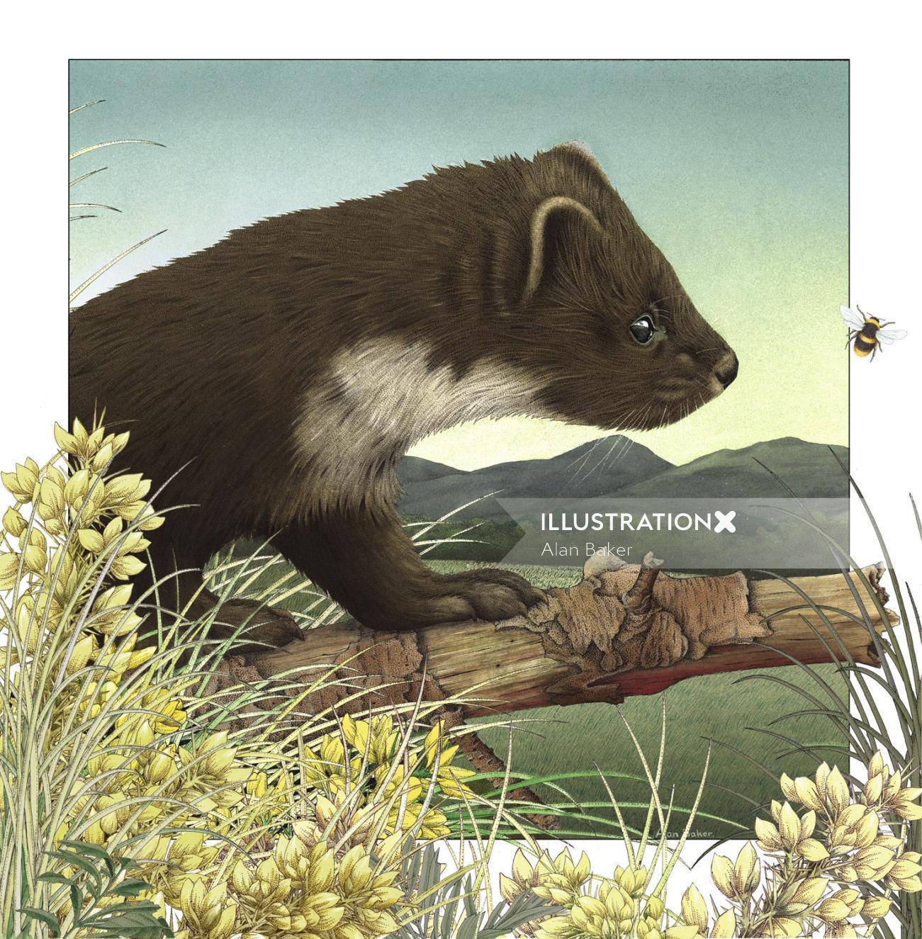 Pinemartin pet illustration by Alan Baker
