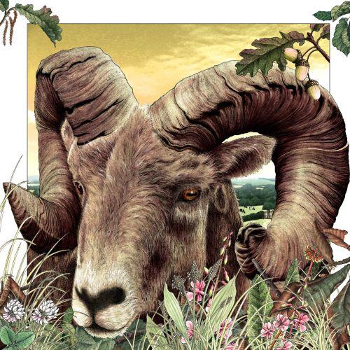 An illustration of sheep horns