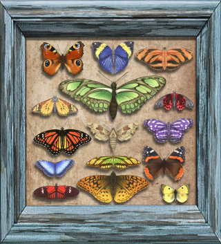 Butterflies in frame - An illustration by Alan Baker