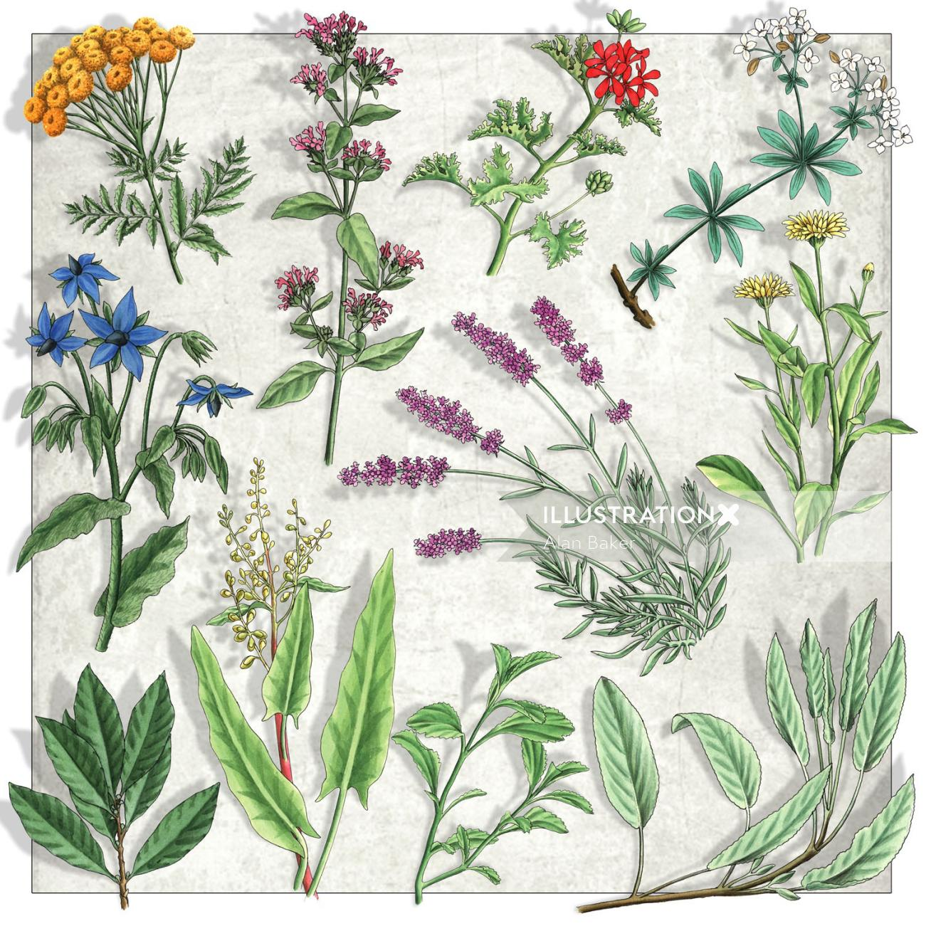 Illustration of Botanical plants and flowers