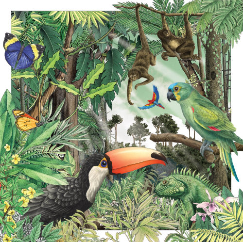 Illustration of birds in the forest  by Alan Baker