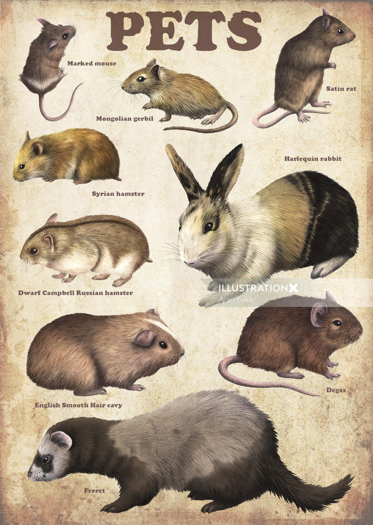 Illustration of pets poster