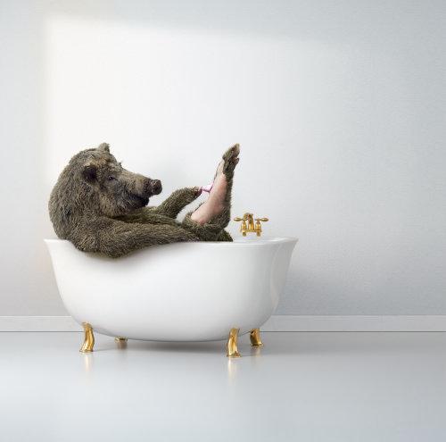 Ilustración gráfica de cerdo en la bañera