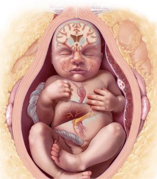Fetal Neurological Development with Maternal Obesity