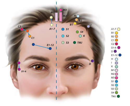 Lifestyle illustration of acupuncture points