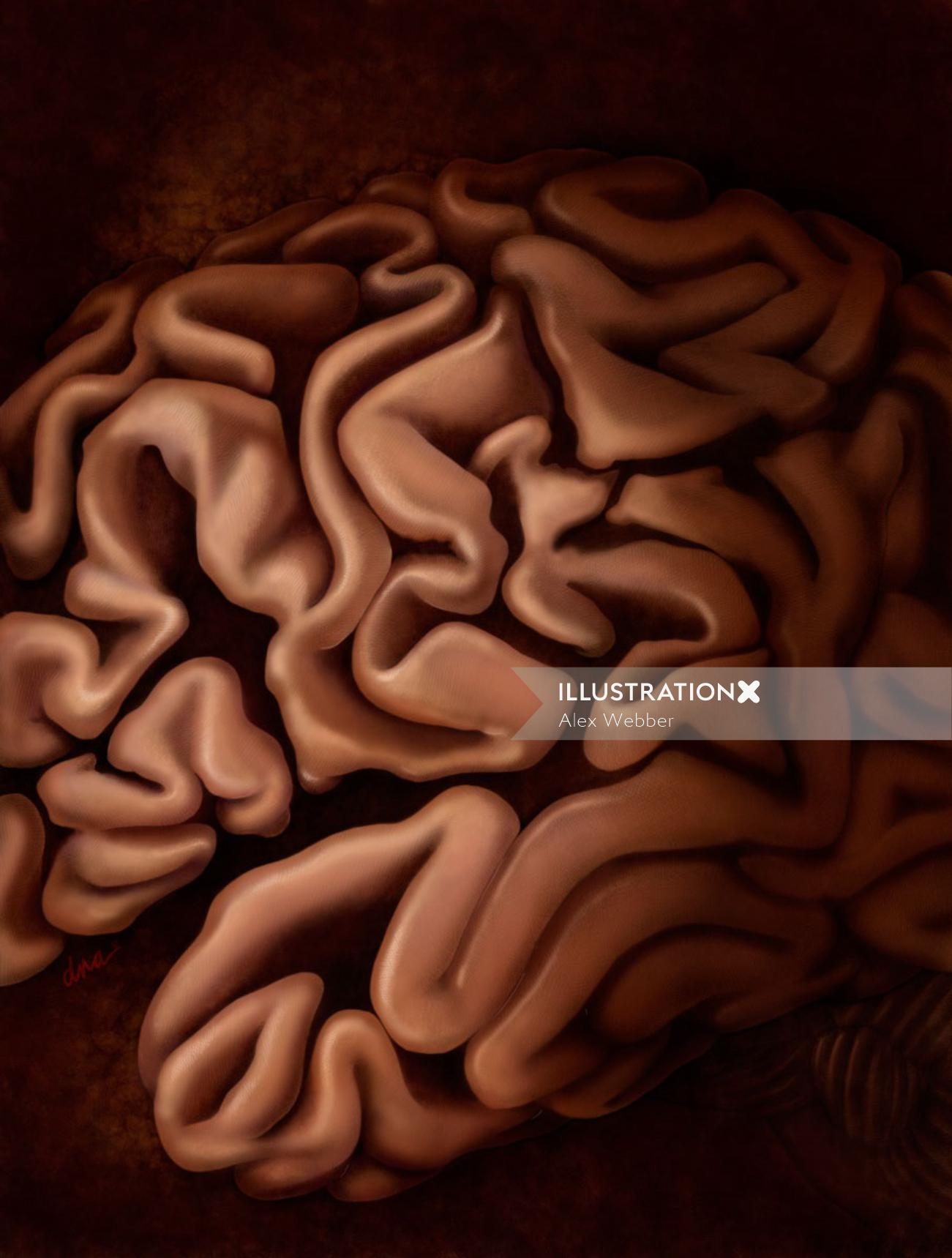An illustration of cerebral cortex of the brain