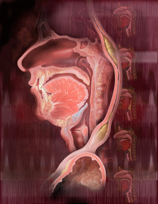 Dysphagia and swallowing illustration by AlexBaker