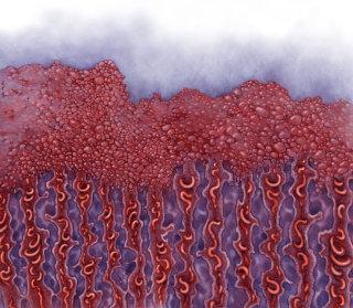 An illustration of cross-section of endometrium