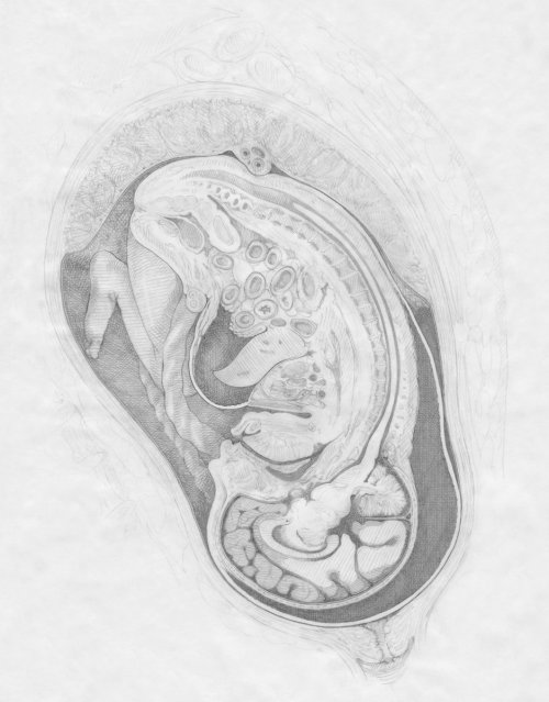 An illustration of fluid in full term fetus