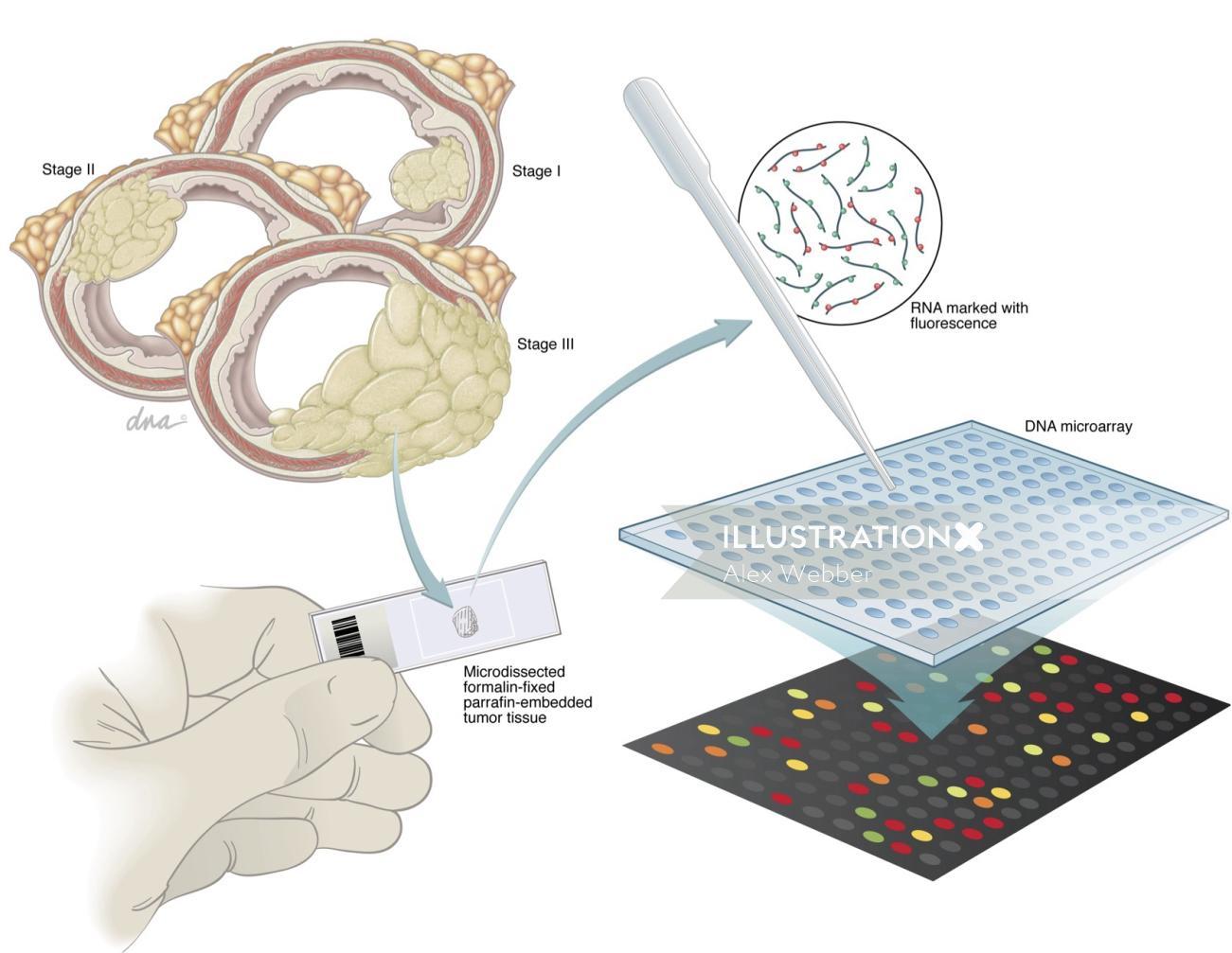 DNA microarray technical illustration