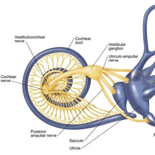 Medical illustration of posterior view