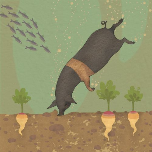 swimming pig wild animals in underwater nature