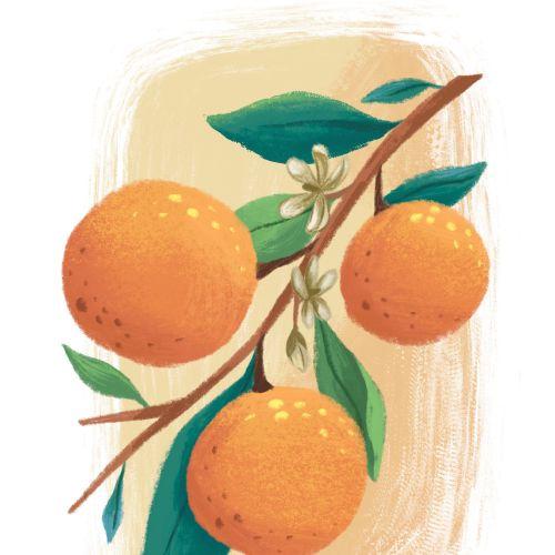 Oranges nature illustration