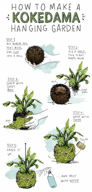 infographic, plants, gardening