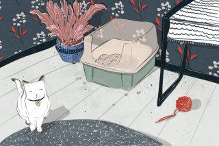 cat, pet, home, clean