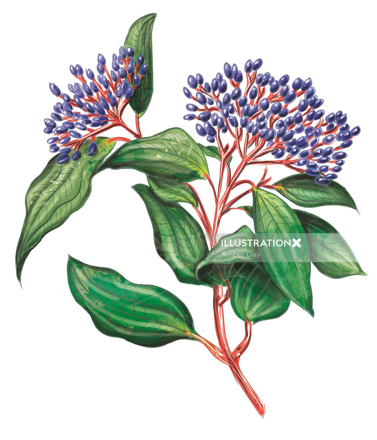 plant, botanical, vintage, leaf, foliage