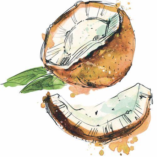 coconut, exotic, food, fruit, watercolor, splash, line, exotic