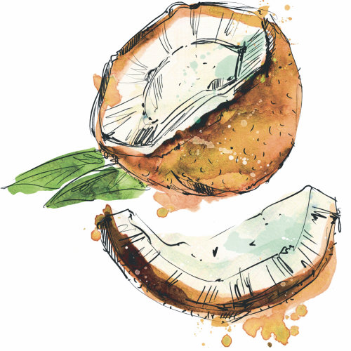 coconut, exotic, food, fruit, watercolor, splash, line, exotic