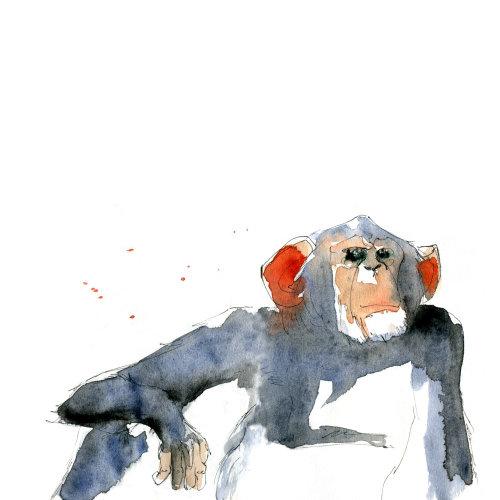 猴子的散装图