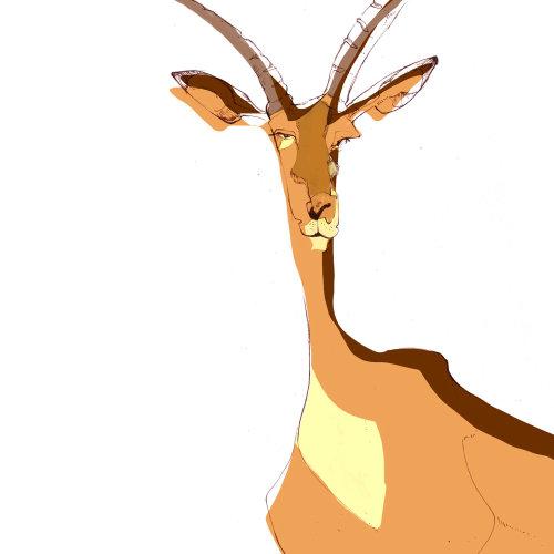 一只鹿的动物插图