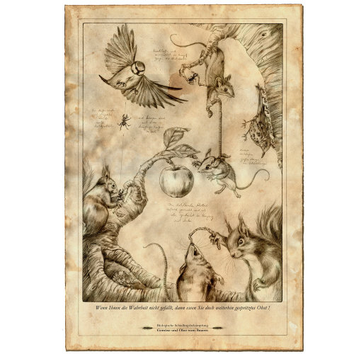 Line illustration of birds and squirrels