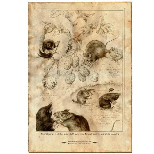 松鼠和鼠标的线图