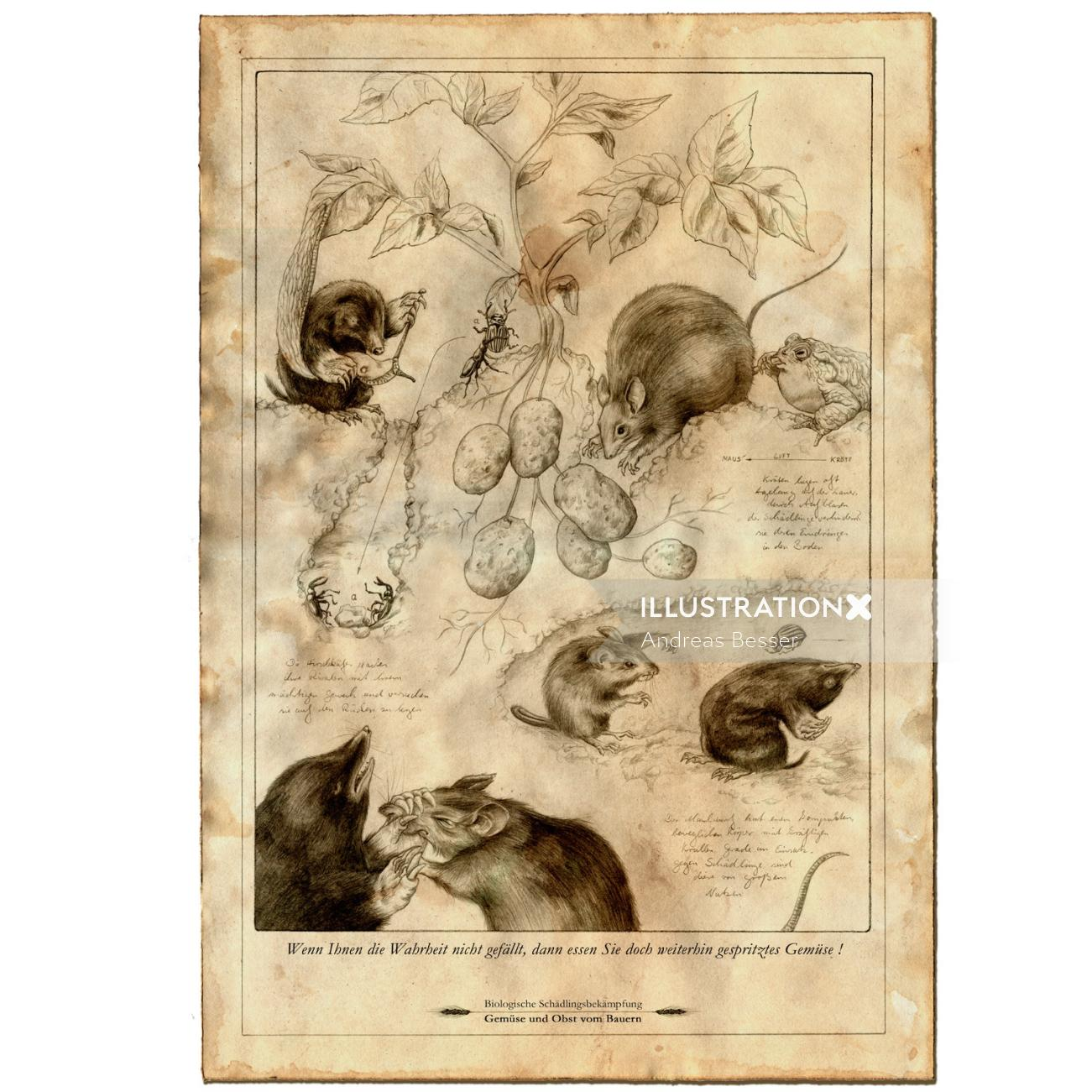 Line illustration of squirrels and mouse