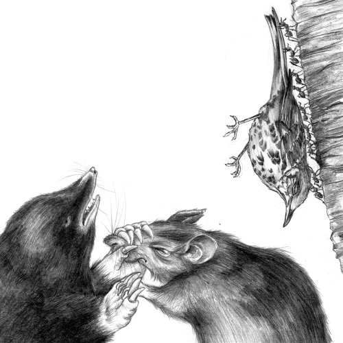Black and white illustration of mouses and a dead bird