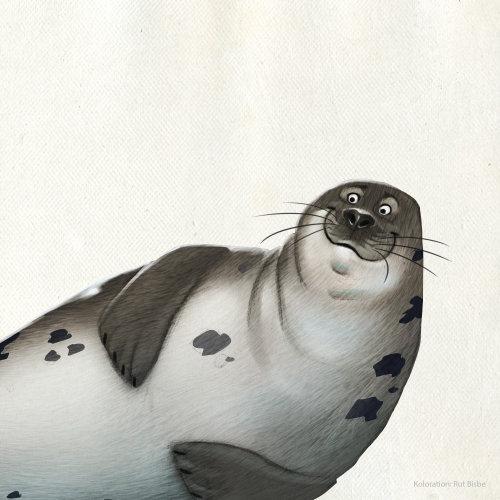 海狮的动物角色设计