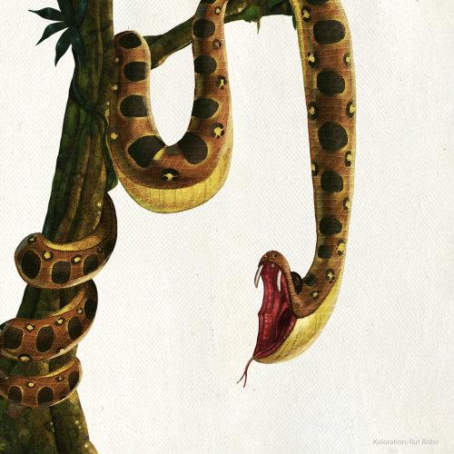 cartoon illustration of a python