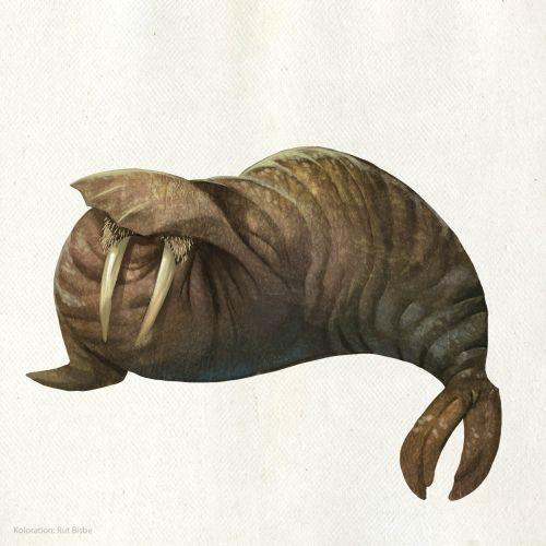 Animal cartoon design of sea elephant