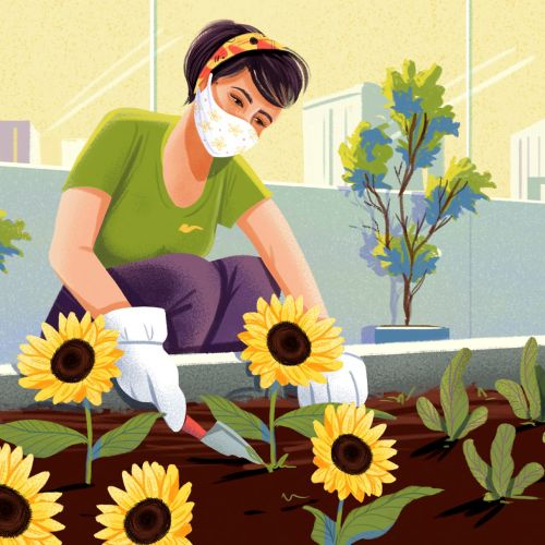 Woman planting sunflower seeds during the Corona Pandemic