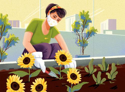 Mujer plantando semillas de girasol durante la pandemia de Corona