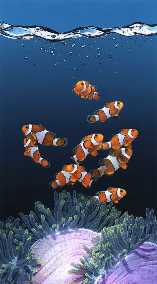 Clown fishes and sea anemones
