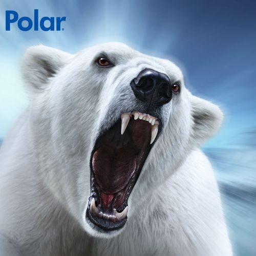 Polar Bear | Wildlife illustration